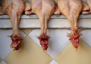 460629_3_chickens.jpg